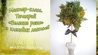 Мастер-класс. Топиарий «Зеленые розы» из кленовых листьев