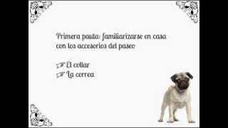 Cómo educar a un cachorro a pasear