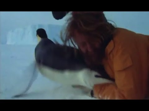 Tackling An Emperor Penguin | Life In The Freezer | BBC Earth