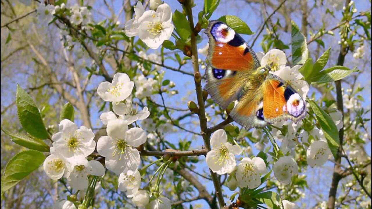 Красивые Картинки природа - 13191 фото обои на рабочий ...