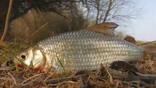 ПЕРВАЯ ВОБЛА ПОШЛА Весенняя рыбалка в Астрахани 2021 Поход за первой воблой