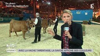 ANIMAUX : Avec la vache Tarentaise, la Savoie affiche ses couleurs