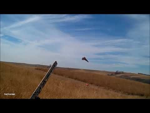 Iowa Pheasant Hunting December 2019