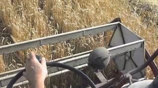 żniwa 2019 kombajn sampo 360 w pszenicy