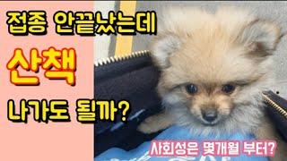 강아지 예방접종 - 수…