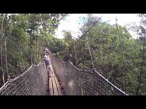 Suspension bridge at The Jardin de Balata Fort-de-France, Martinique
