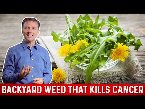 A Backyard Weed the Potential to Kill Cancer Cells