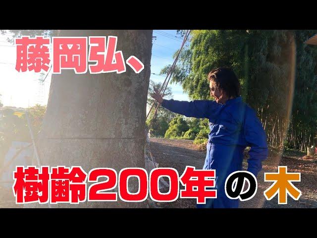 「樹齢200年の木を見つけた時の藤岡弘、」