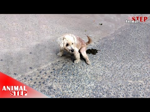 Blind Stray Dog Dragged On the Street Waiting Someone for Help