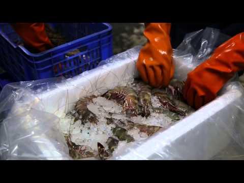 Fresh Shrimp Packing