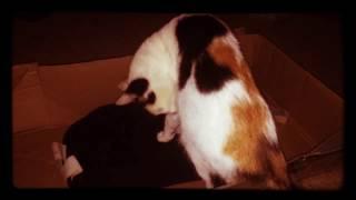 My cat licking herself