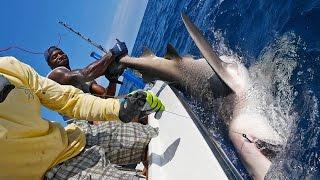 Shark Challenge with NFL Linebacker Sam Barrington - ft. Chew On This