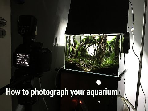 Aquarium Photography - How To Photograph Aquarium
