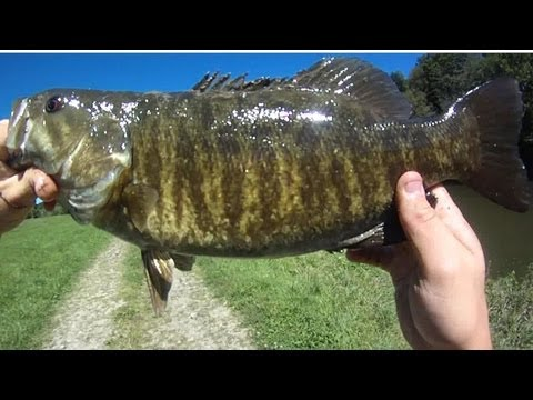 Lure Fishing #34 - Burning Rebel Crawfish Crankbaits For Smallmouth Bass In Small Rivers