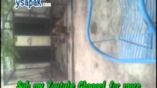 Amazing Poultry Farm Must watch, Lalamusa Chicks, Desi Pakistani Chicks