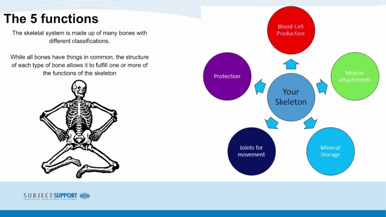 Gcse Pe Lesson 7 111 Functions Of The Skeletal System Youtube