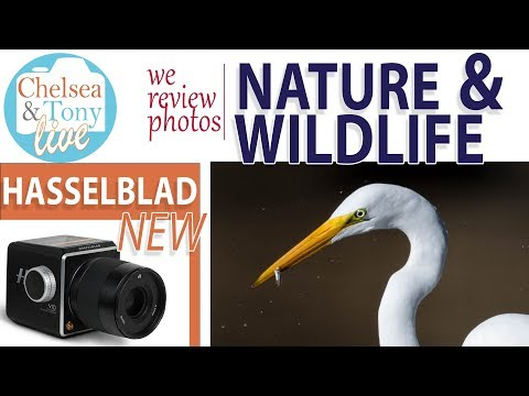 Amazing Nature/Wildlife Photos, New Hasselblad? Chit Chat! (TC LIVE)
