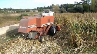 Zbiorów ziarna kukurydzy, z kombajny Laverda 3450