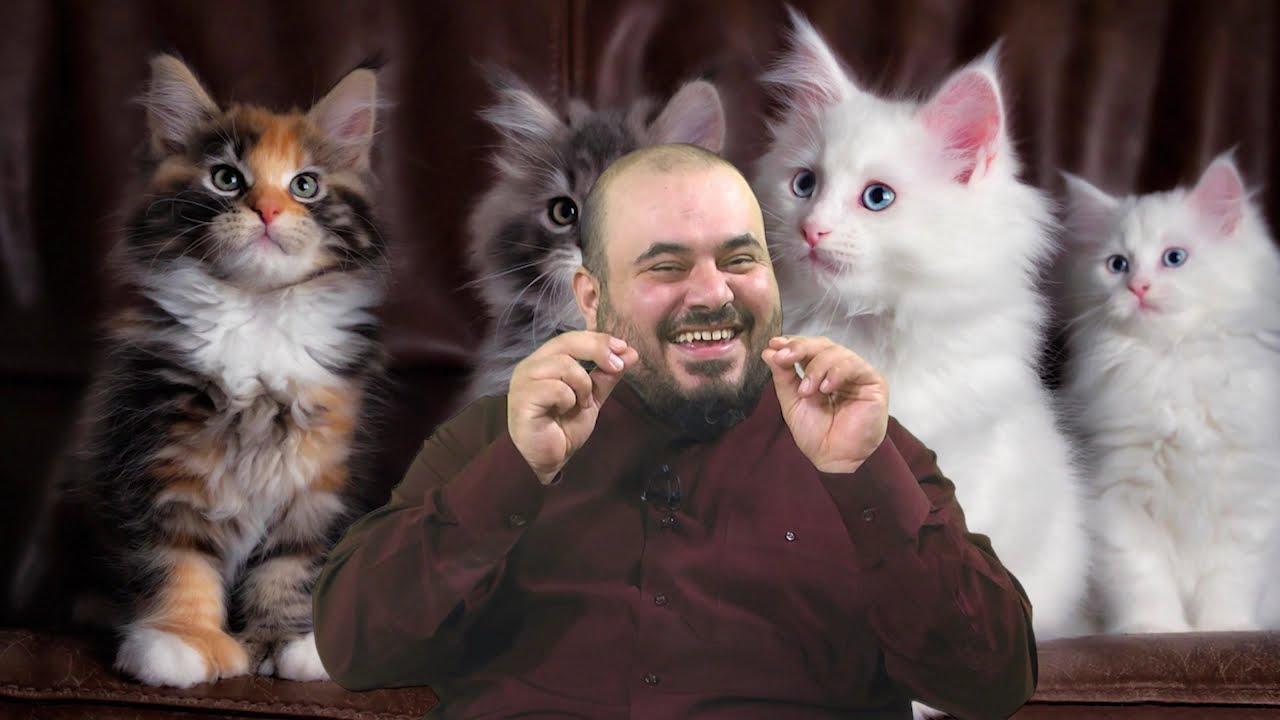 Rüyada Kedi Görmek Bütün Anlamları