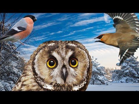 Как зимуют птицы || Миллион вопросов о природе