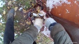 Видео: забой и разделывание кролика