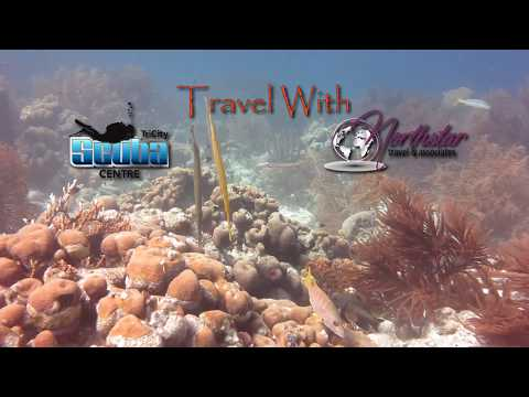 Travel | Bonaire - Travel With Tri-City Scuba and Northstar Travel