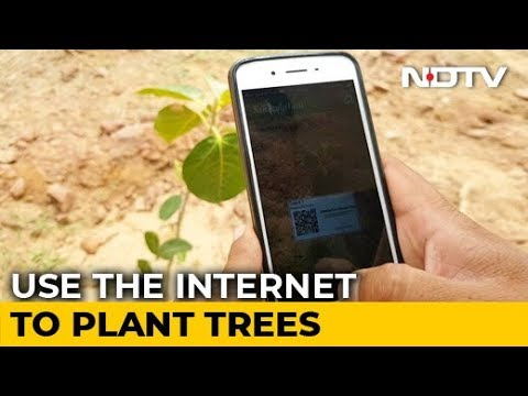 This NGO Helps People Plant Trees Virtually
