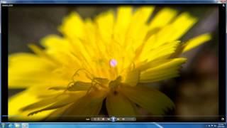 How to Open .MP4 files (Windows 7, Windows Media Player, Codec)