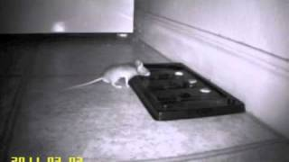 Man vs. Mouse on Video
