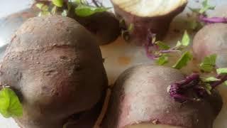 How to grow sweet potato in New Zealand - Kumara (RECYCLE)