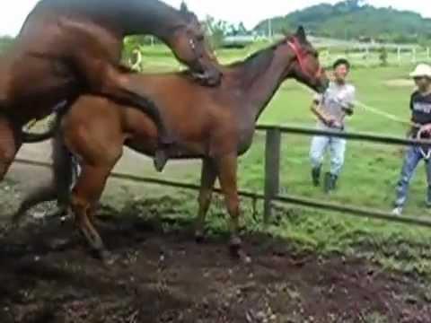 Amazing Brazilian Body--Beautiful Latin Woman Dancing (Music Video) from YouTube · Duration:  2 minutes 23 seconds