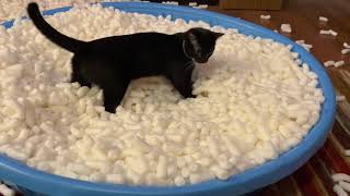 I Gave My Cats 10,000 Packing Peanuts To Play With!  Hilarious Reaction