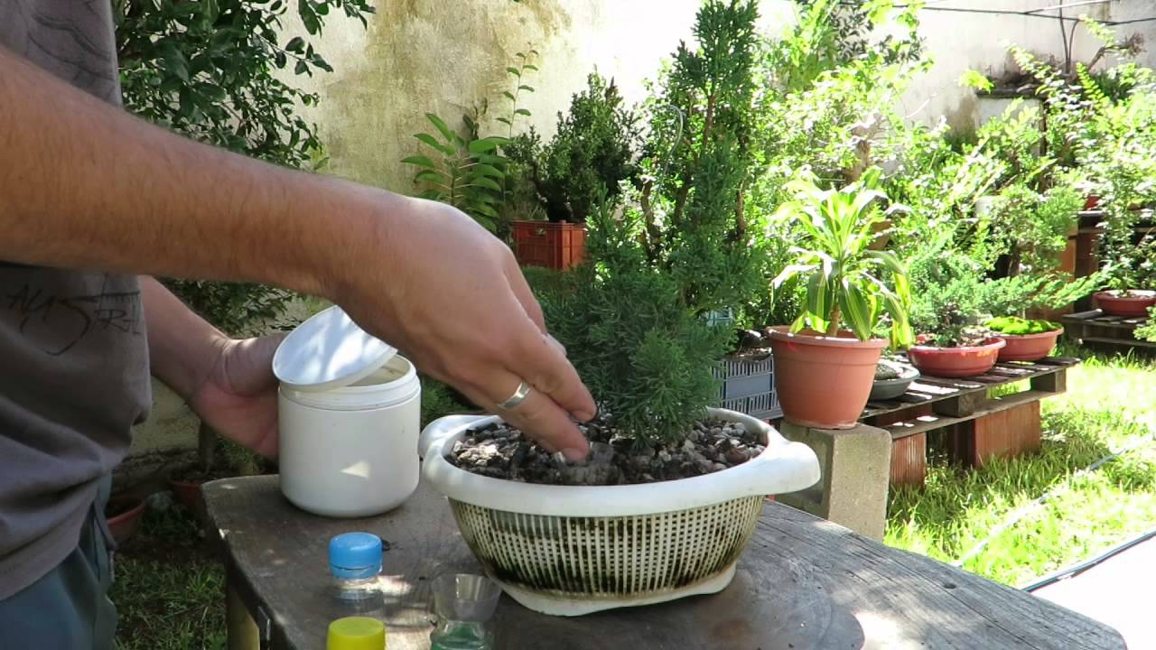 06 dyst max dispenser para fertilizante de bonsai y plantas en maceta youtube - Abono para magnolios ...