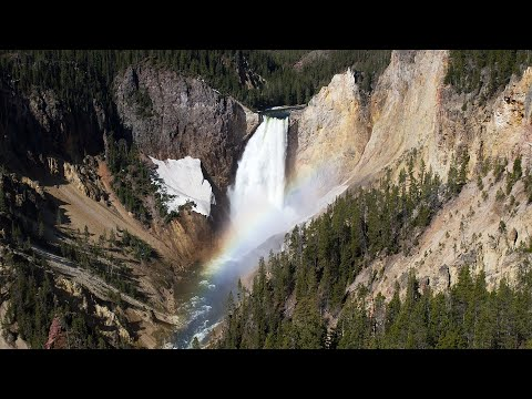 Yellowstone Awakens: Spring Wildlife and Scenery in Yellowstone National Park