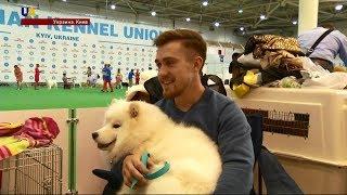 В Киеве прошла самая большая выставка собак Европы