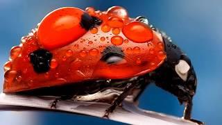So beautiful ladybirds (HD1080p)