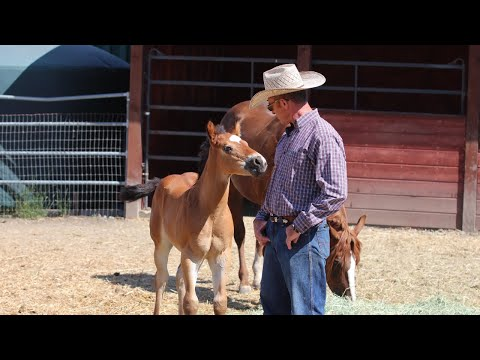 """Touching a Foal that """"can't"""" be Touched"""