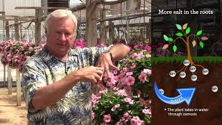Plant Physiology for Growers, Part 3: Heat, Light and Moisture Conditions