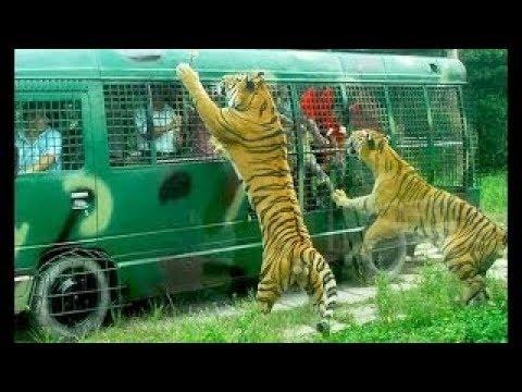 Gazipur Bangabondhu Safari Park..