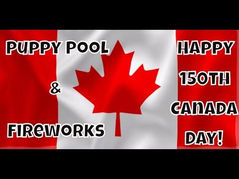 Puppy Pool & Fireworks. Happy 150th Canada Day: Just Gin 3: Cutest Dog Ever! VOL. 43