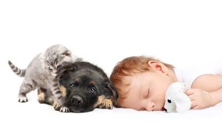 Best Way to Keep Family Pets Out of Cot/Crib Safely