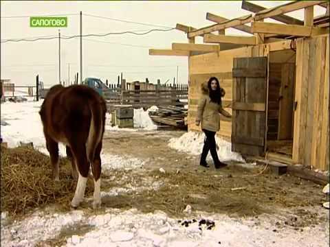Путин подарил девочке лошадь