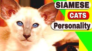 Siamese Cats Personality  Are Siamese cats aggressive?