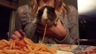 Смешные и голодные животные