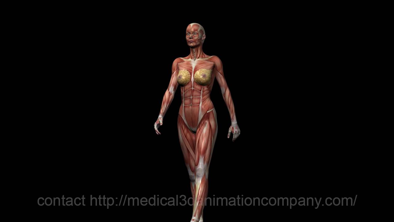 Anatomy Woman Walking 3d Medical Animation Company Studio 3d