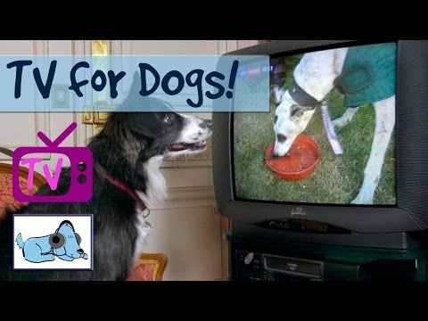 6 Hours of The Best TV For Dogs Yet, Help with separation anxiety and stop barking with Dog Tv