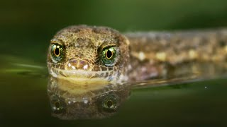 The Unsinkable Lizard | A Perfect Planet | BBC Earth