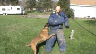 Tri-state Canine Services L.l.c. ~ K9 Kay~drug And Explosives Dog Training