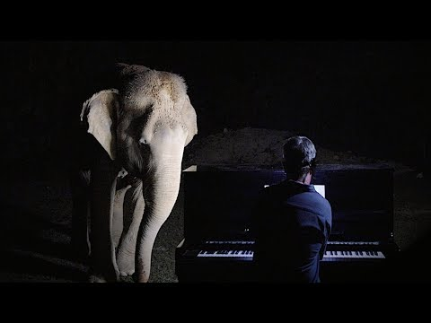 Jim E. Chonga - Pianist Plays Christmas Music for a Blind Elephant