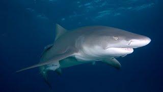 Shark expert reassures Kiwis it is safe to swim despite multiple shark sightings this summer